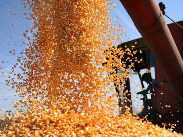 Javni poziv: Merkantilni kukuruz za tovnu stoku Merkantilni%20kukuruz
